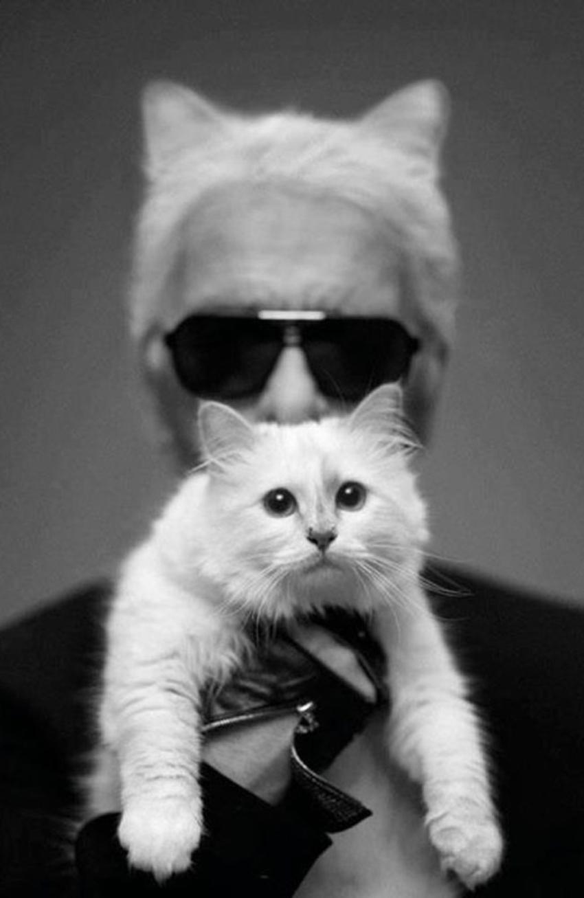 """Кайзера """"осинови"""" малко сиамско котенце, на което даде името Шупет"""