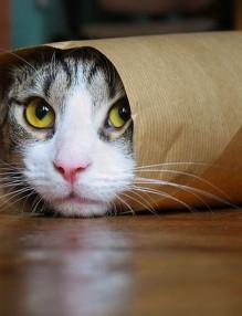 Световен ден на котката