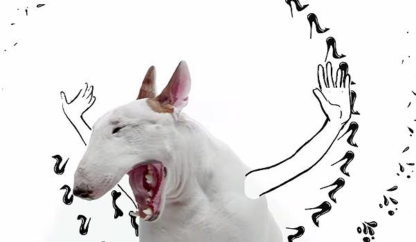 20150508-dog-5