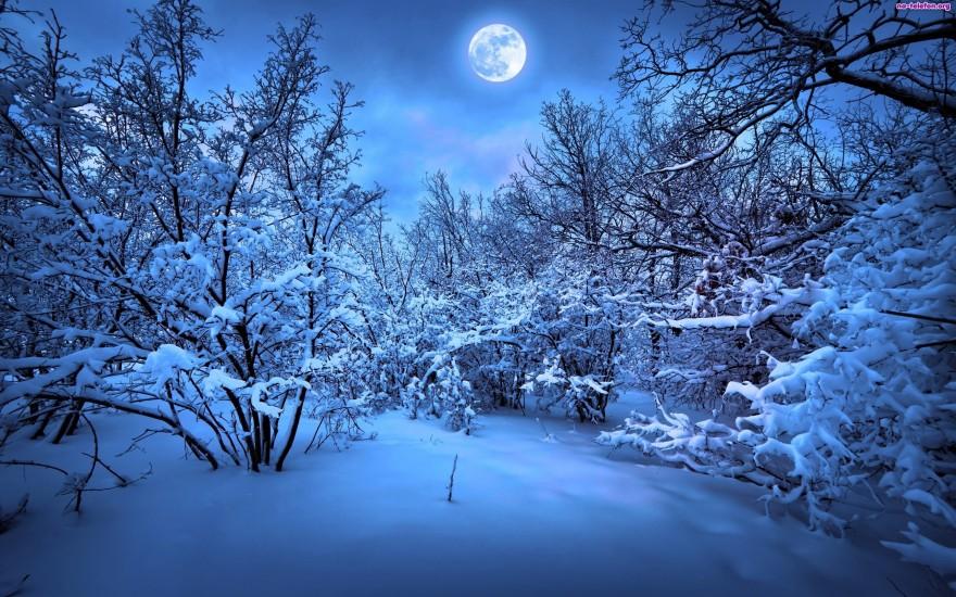 drzewa-ksiezyc-zima