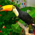 Папагали