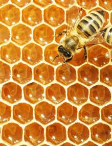 HoneyBeeTruckAccident