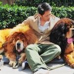 140813-gp-china-dogs_4_d4909a2ebf826f05063ad0caa109ebcb.nbcnews-ux-2880-1000