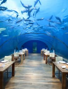 ithaa-undersea-restaurant-woe1-880x585
