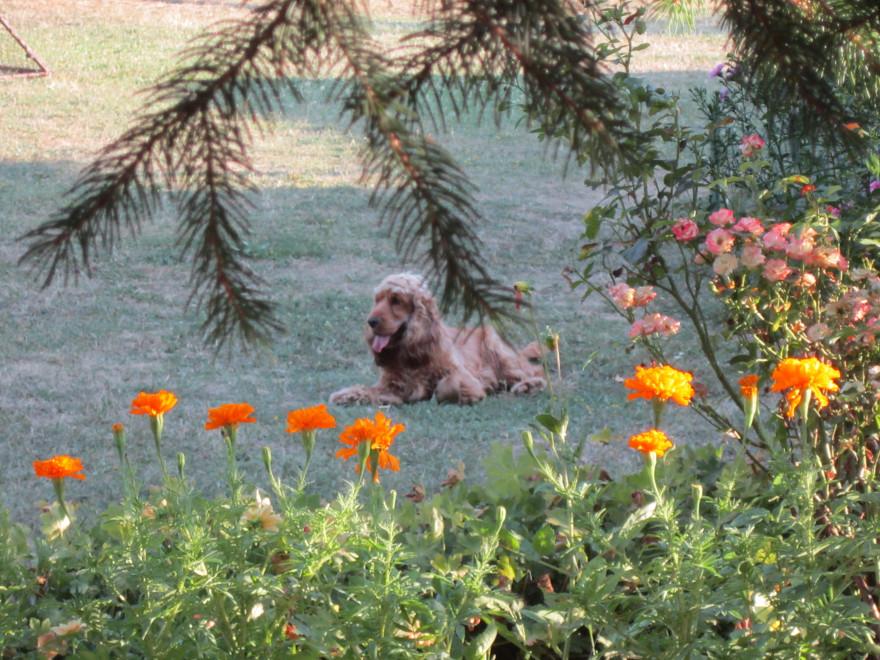 Кучето се нуждае от чести разходки сред природата. Снимка: Силвия Аризанова