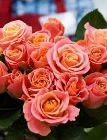 rose-3090840_960_720