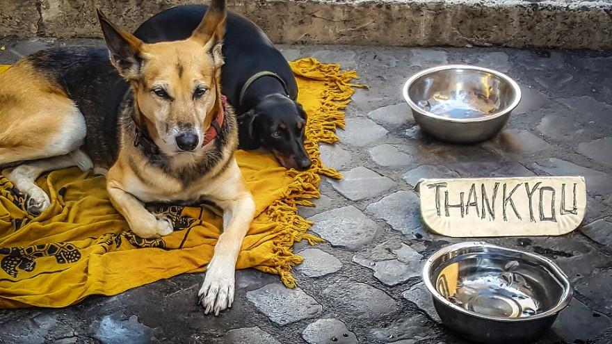 бездомните животни