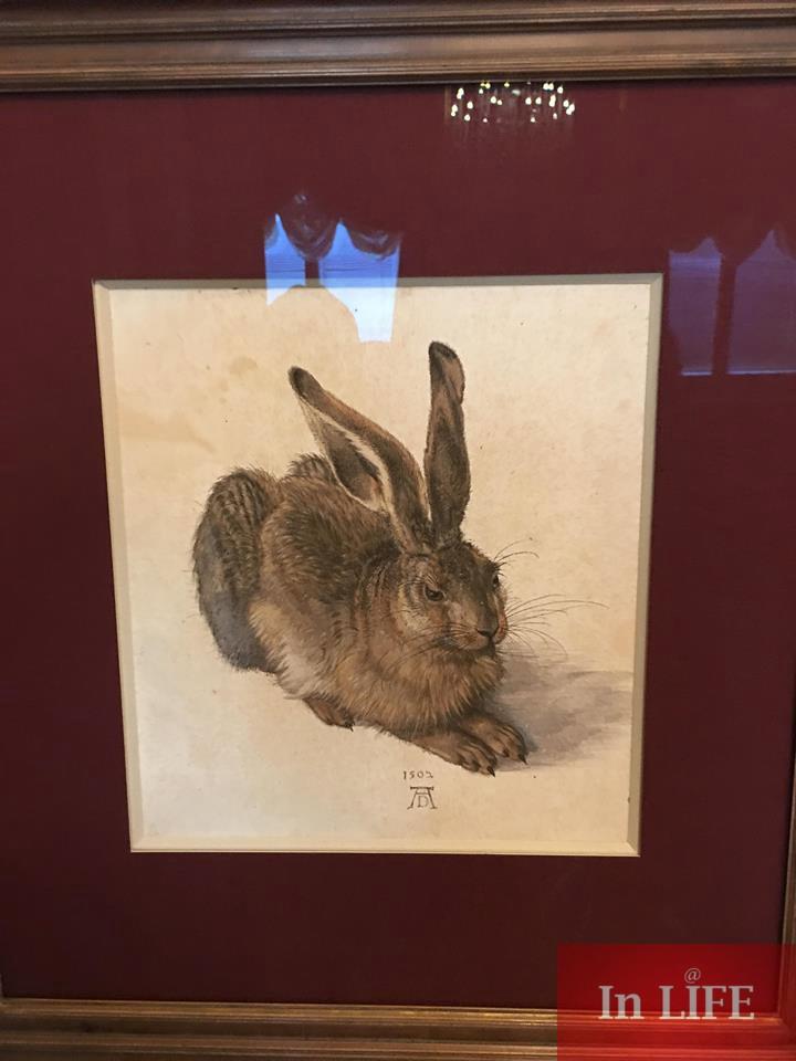Дюрер, Малък заек 1502г., Албертина Виена