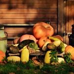 pumpkin-3775726_960_720