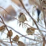 sparrow-292637_960_720