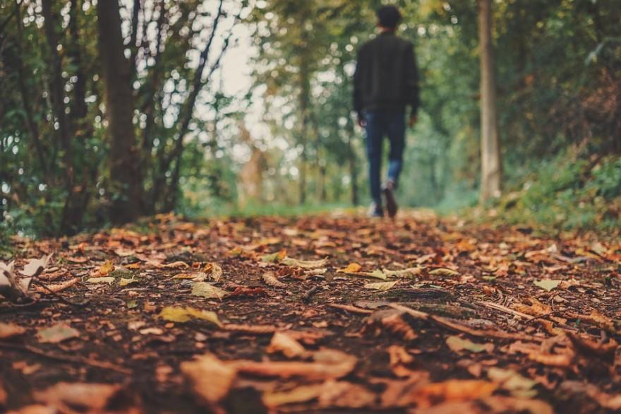 autumn-1869160_960_720