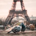 bird-2590901_960_720