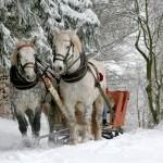 sleigh-ride-549727_960_720