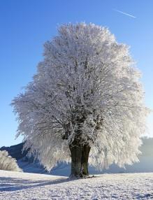 tree-1959267_960_720