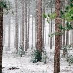 woods-690257_960_720