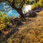 дърво, пак, есен, природа