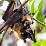 bats-3495805_960_720