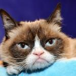 Сърдитата котка Grumpy Cat