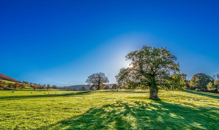 tree-2916763_960_720