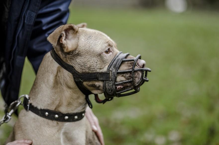 Куче с намордник