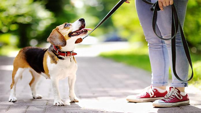 Куче на разходка