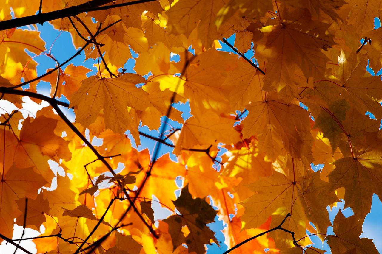 autumn-4520049_1280
