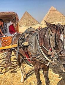 Джино Бианкалана и Кристиана Канева в Египет