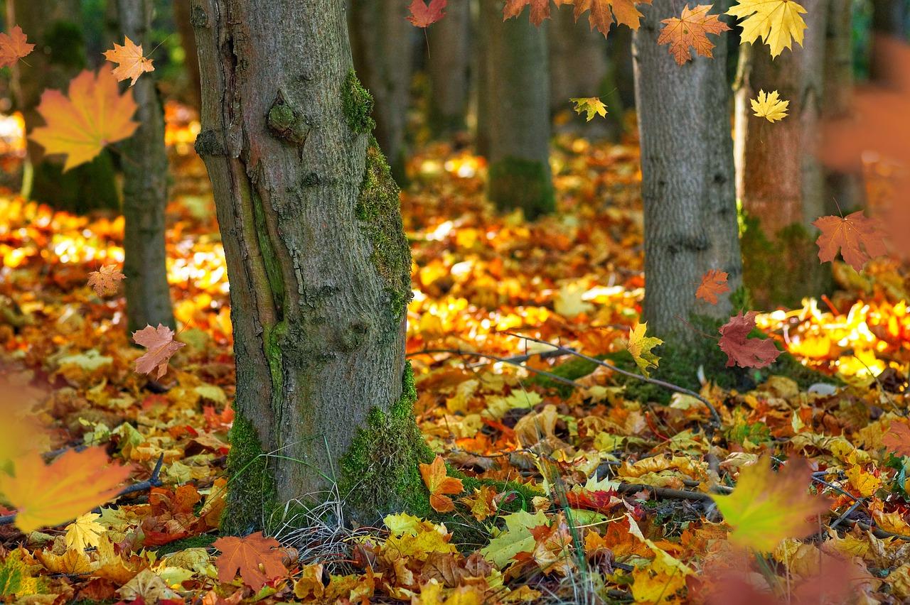 fall-foliage-4514077_1280