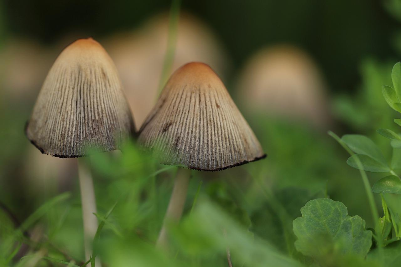 mushroom-4539317_1280