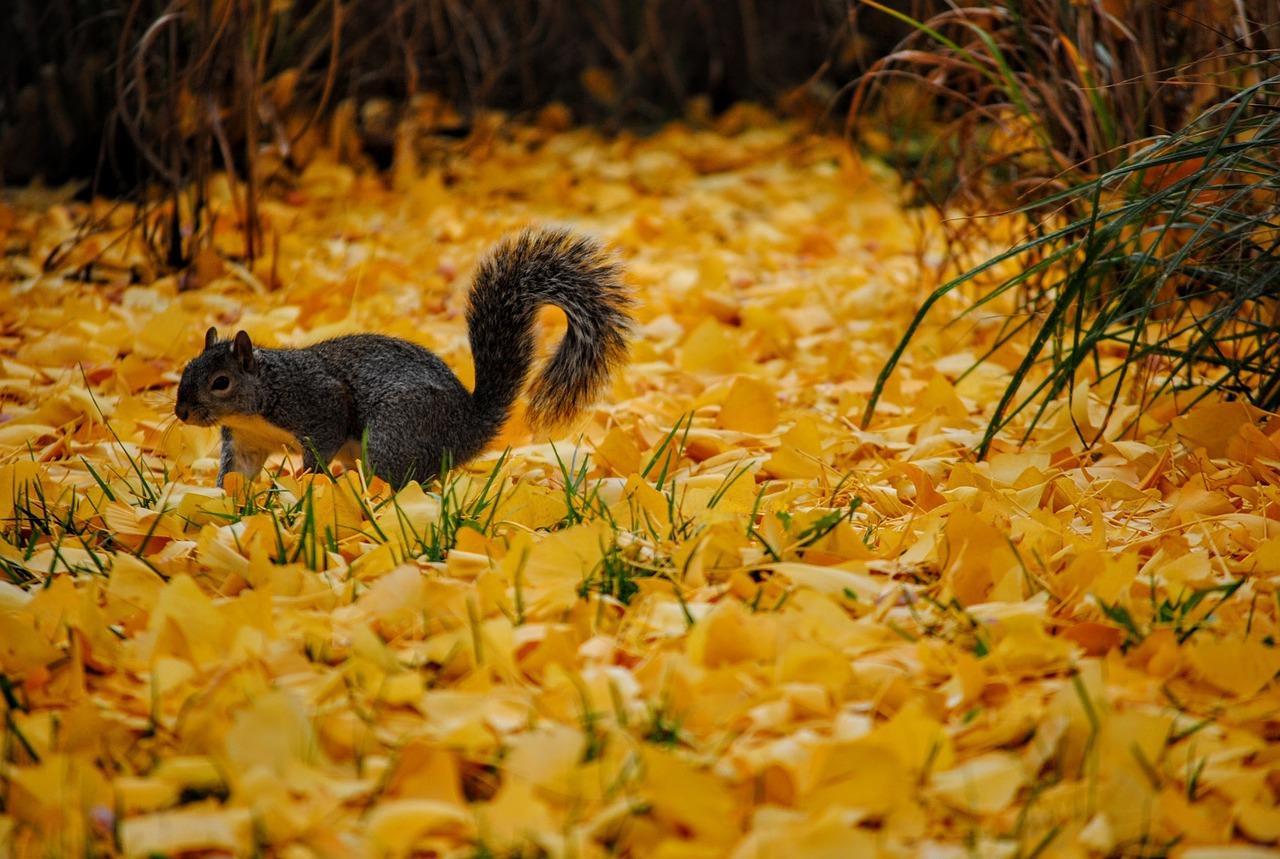 squirrel-1209970_1280