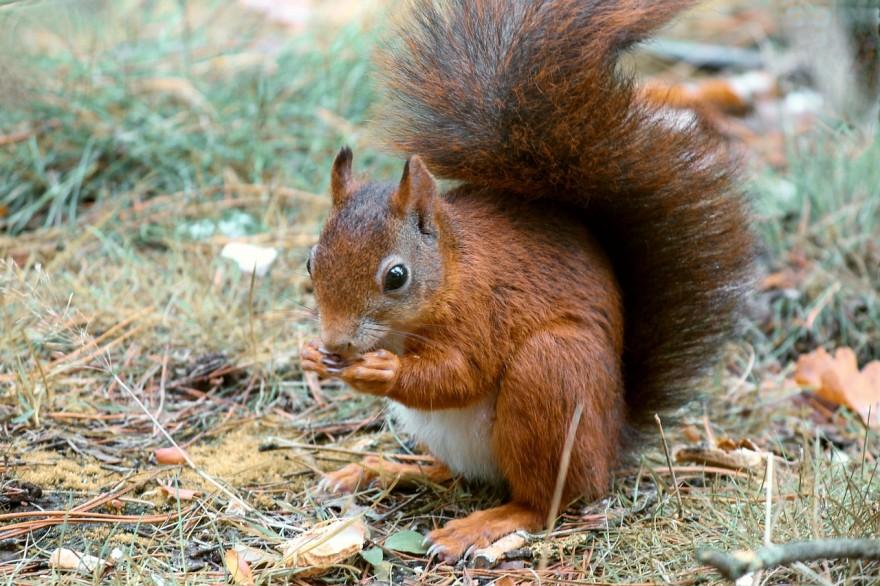 squirrel-4557511_1280