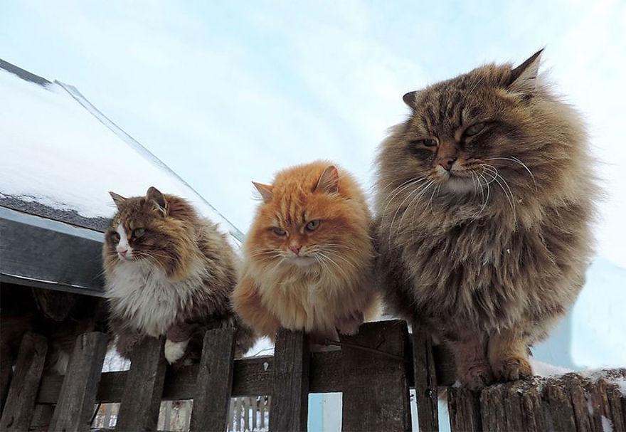 Котландия - котки