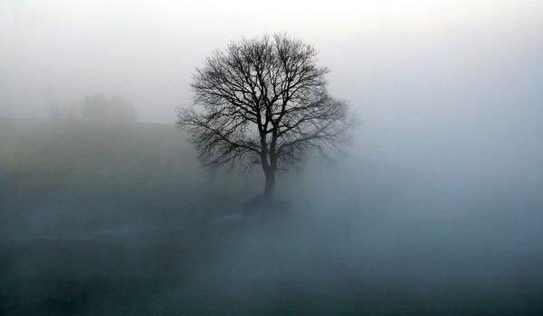 mystery_tree3
