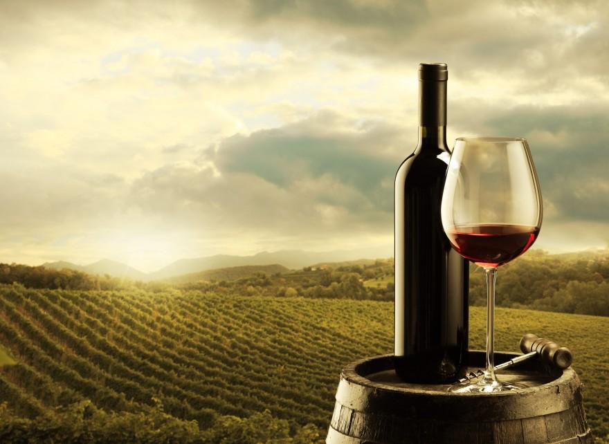 Wine-880x642
