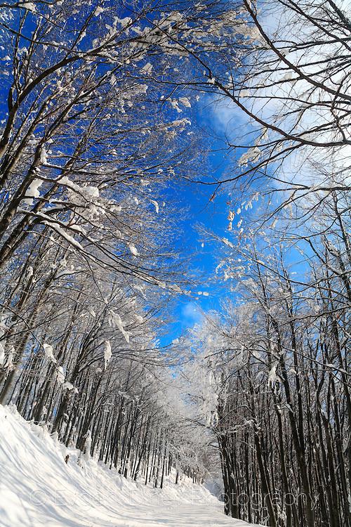 winter-6587d